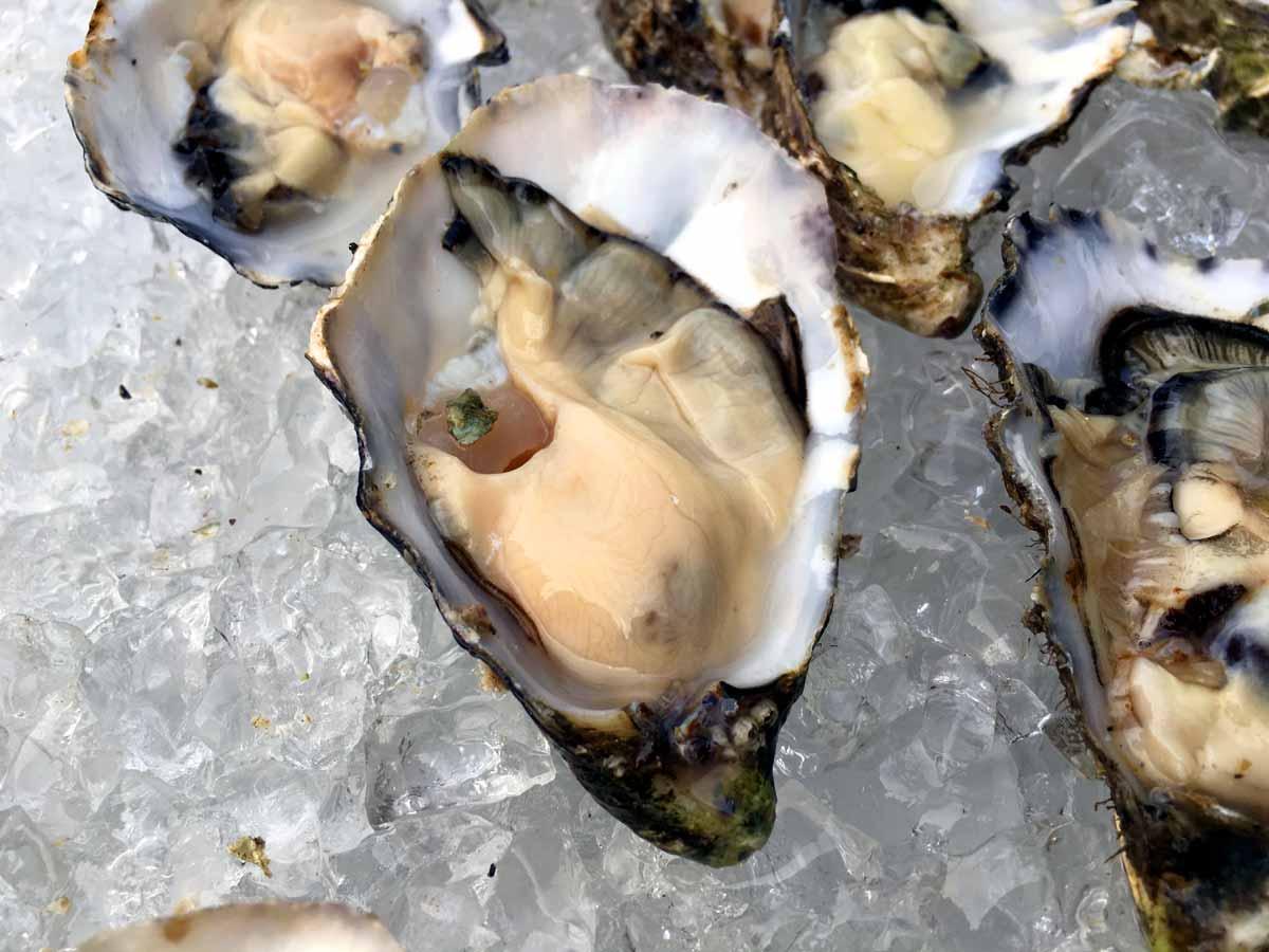 Gillardeau Austern