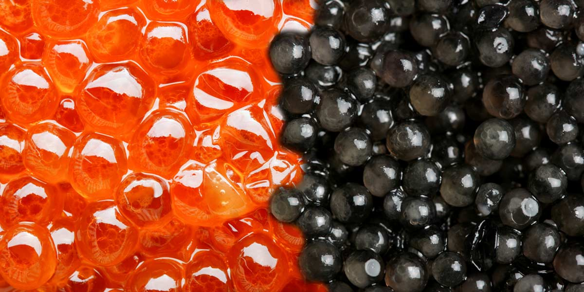 Fruit caviar and trout caviar and seaweed caviar and chocolate caviar and truffle caviar etc. Char, salmon trout, chum, Harenga, etc.
