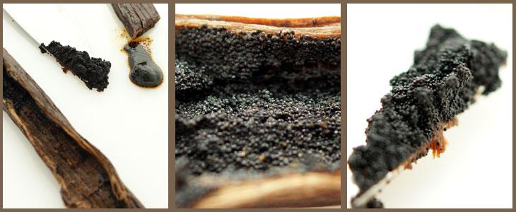 Bourbon Vanille-Schoten aus Madagascar, 5 Schoten