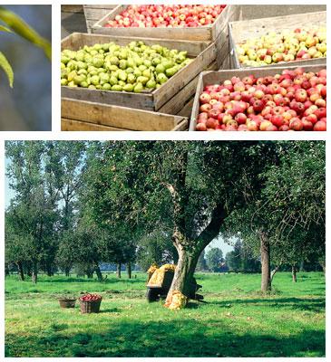Obstsäfte von van Nahmen