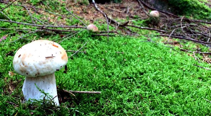 Pilze (getrocknet)