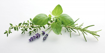 Wiberg Kräuter der Provence, getrocknet - 220 g - Aroma-Tresor