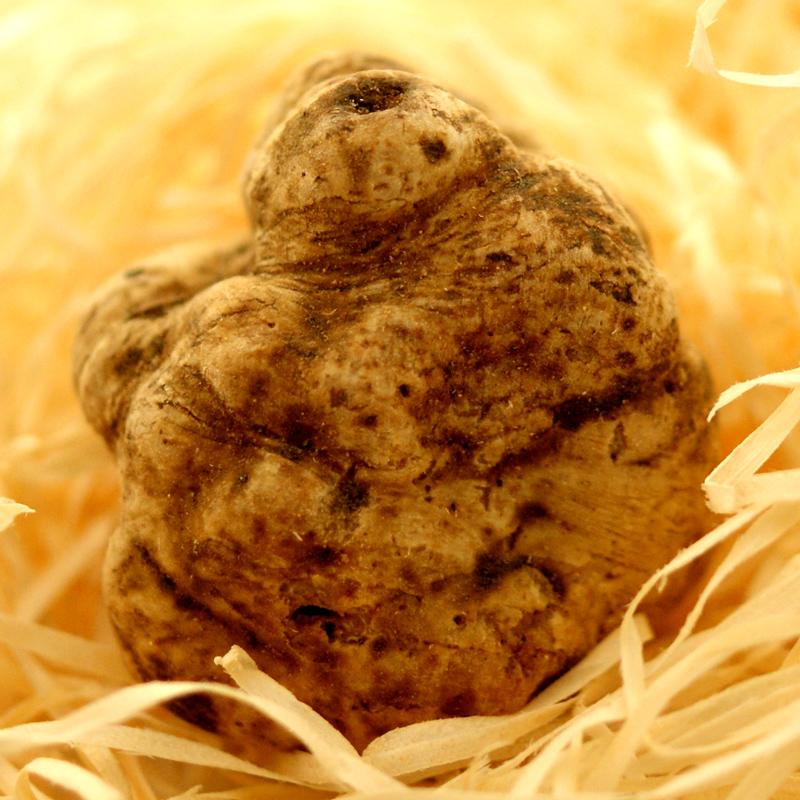 Trüffel frischer weißer Alba-Trüffel, tuber magnatum pico, La Bilancia, Knollen ab ca. 20g, von Oktober bis Ende Dezember (TAGESPREIS) - pro Gramm - -