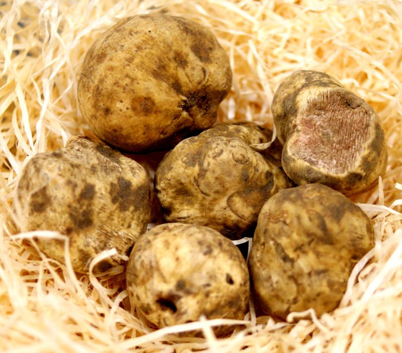 Trüffel kleine weiße Trüffel, Tondellos, von Oktober bis Ende Dezember (TAGESPREIS) - pro Gramm - -