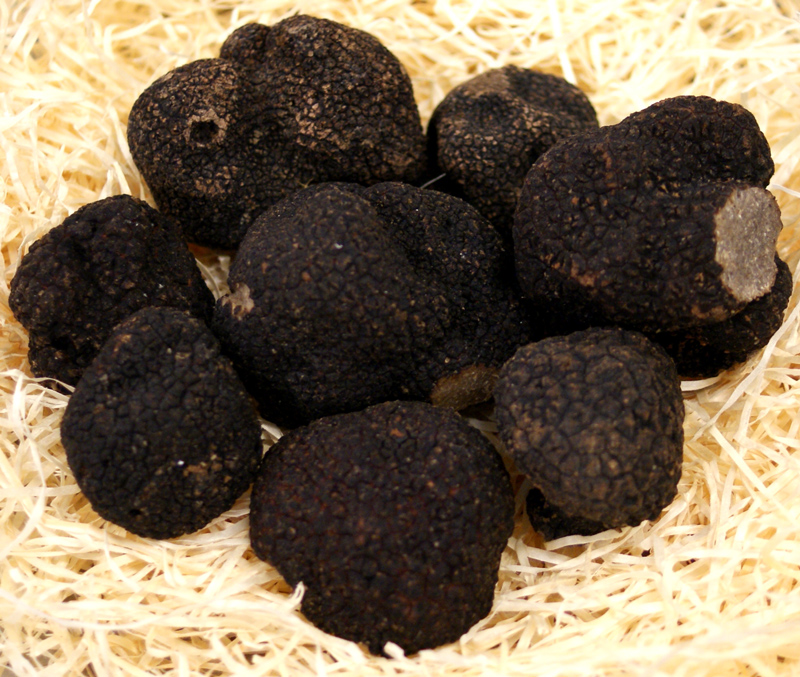 Trüffel Winter-Edeltrüffel frisch aus Frankreich, tuber melanosporum, Knollen ab ca. 30g, von Nov. bis März (TAGESPREIS) - pro Gramm - -